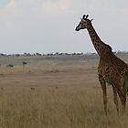 Morning on the Mara. by stewartshang
