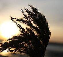 grass by dawid