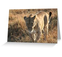 On the prowl. Greeting Card