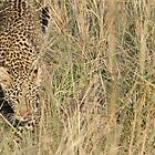 Checking things out. by stewartshang