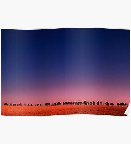 Windbreak at dusk Poster