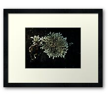 0138 - HDR Panorama - Lichen 8 Framed Print