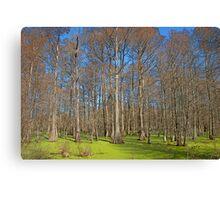 Cypress Swamp Canvas Print