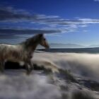 Dreaming Wild by Gene Praag