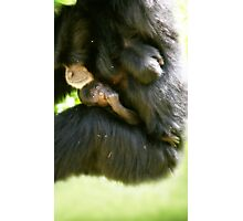 Mother & Baby Monkey Photographic Print