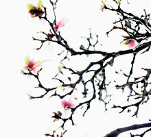 Magnolia abstract by ctsang
