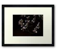 0205 - HDR Panorama - Dried Flowers 4 Framed Print