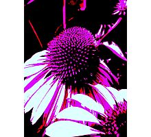 PURPLE WITH A DIFFERENCE Photographic Print