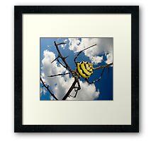 Black & Yellow Garden Spider Framed Print