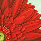 red gerbera by cathy savels