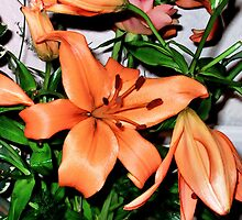 orange lilies by cynthiab
