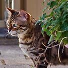 Ziggy at the Catnip Plant by Sandra Chung