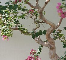 Flowering Branches by pfymariano