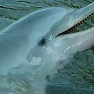 ...because I love dolphins by Nixter