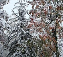Trees in the Snow by pfymariano