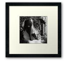 Good Doggy Framed Print