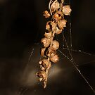 Tangled Seed Pods in Sepia by Lesley Smitheringale