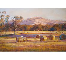 Fields of Gold - Tallarook Photographic Print