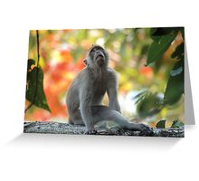 Monkey Daydreams Greeting Card