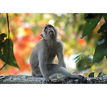 Monkey Daydreams Photographic Print