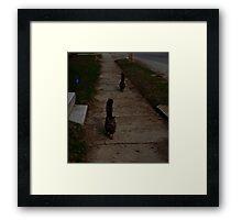 0276 - HDR Panorama - Tom following self Framed Print