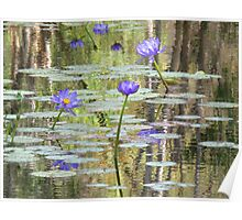 Water Lilies at Cape River Poster