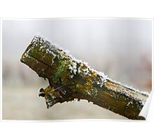 Hoar Frost on Branch Poster