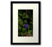 0292 - HDR Panorama - Violet Framed Print