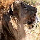 Lion by Marylou Badeaux
