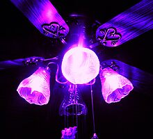 Purple fan,accidental shot,but turned out good by mel1forjon