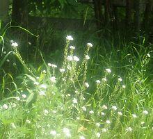 Bright Flowers by jwawrzyniak