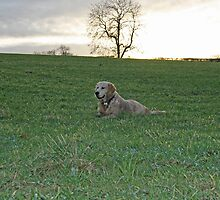 Dog in a field by allymcdonald