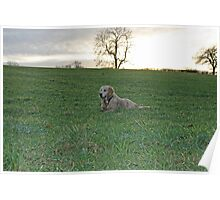 Dog in a field Poster