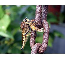 Robber Fly With Honeybee Photographic Print