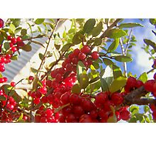 berry Photographic Print