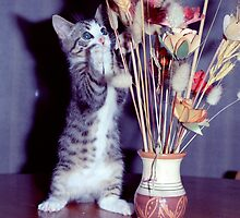 Cat with Flowers by philmilton