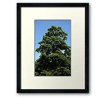 0350 - HDR Panorama - Tree Framed Print