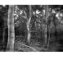 Hyper-Boreal Photographic Print