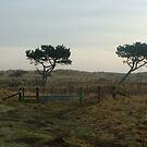 Two trees by Nixter