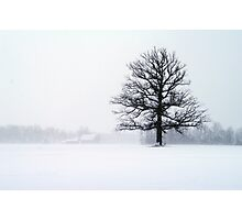 Blizzard Tree Photographic Print