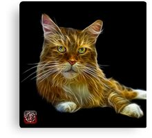 Maine Coon Cat - 3896 Canvas Print