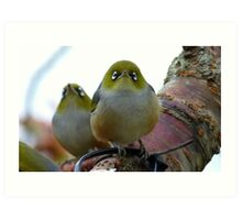 Look to the heavens my friend! - Silvereye - NZ - Southland Art Print