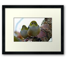 Look to the heavens my friend! - Silvereye - NZ - Southland Framed Print