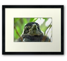 What on Earth are you! - Baby Magpie - NZ - Southland Framed Print