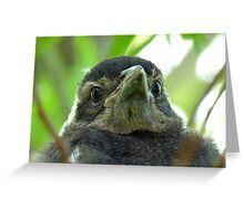 What on Earth are you! - Baby Magpie - NZ - Southland Greeting Card