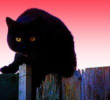 Crazy Catz by pjm123