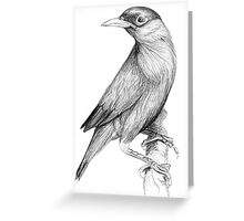 Ballpoint Bird Greeting Card
