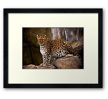 I dare U Framed Print