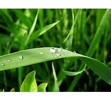 Dew on Grass Photographic Print