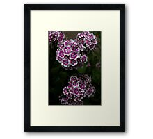 0436 - HDR Panorama - Fancy Flowers Framed Print
